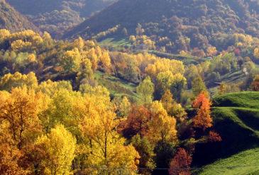 La Ghisola: dolce presenza alla Festa della Mela di Monfumo